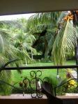 Costa Rica, Day 6