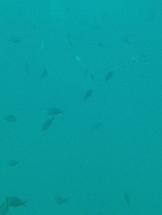 2014-03-07 10.26.43